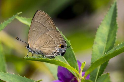 retas,drugelis,vabzdys,gamta,laukinė gamta,trapi,sparnas,detalus