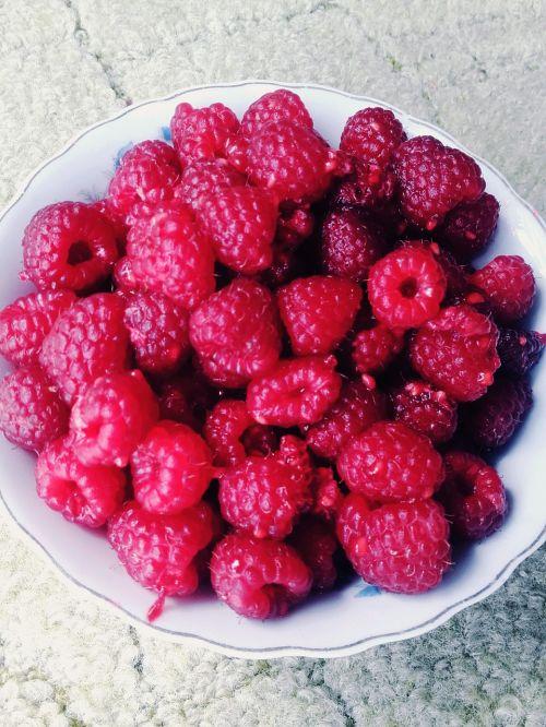 raspberries fruit summer