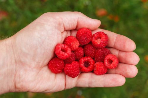 raspberry berry vitamins