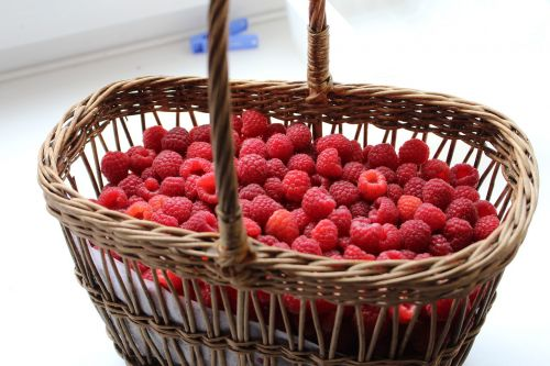 raspberry berry harvest
