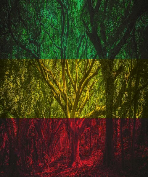 rasta  forest  rastafari