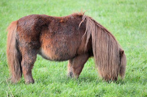 Rasta Pony