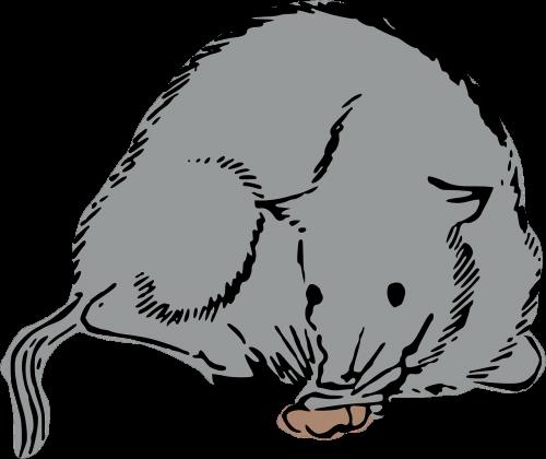 rat mouse woodcut