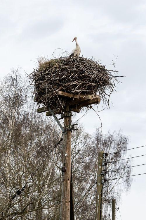 rattle stork nest stork