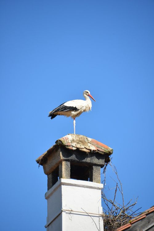 rattle stork fireplace stork