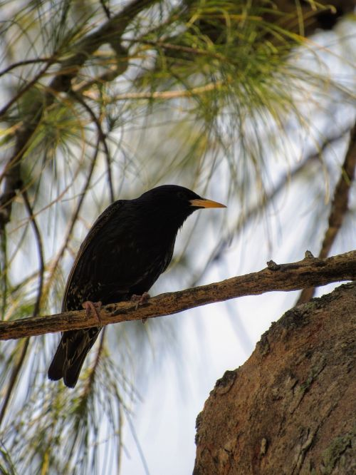 raven bird a lone