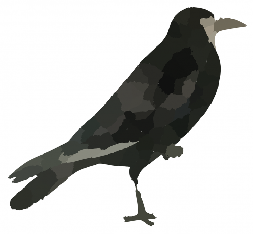 raven black bird crow