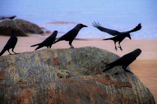 raven beach ocean