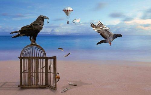 raven  cage  dove