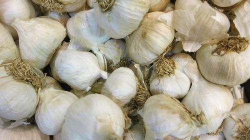 raw garlic bulbs fresh
