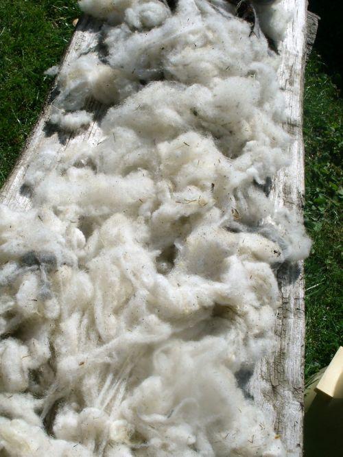 žaliavinė vata,gryna nauja vata,avių vilnos,nuplauti,gamtos vata,avys,schur,bio,prekė,schäfer,ūkis