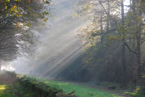 rays of sunshine light trees