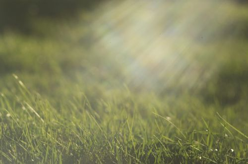 saulės spinduliai,žalia žolė,žolė pavasarį