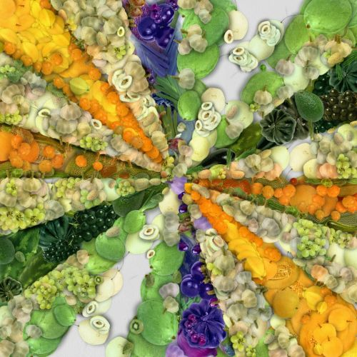Rays Of Vegetables