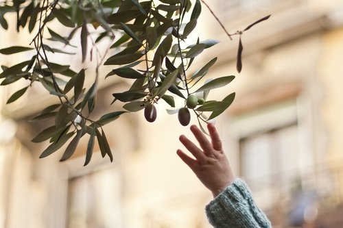 reaching  reaching for an olive branch  olive
