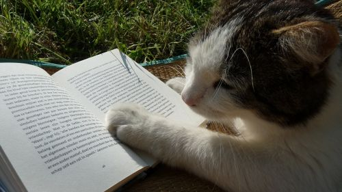 reading book cat