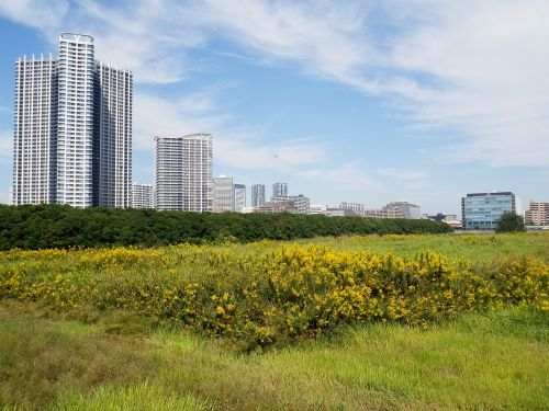 real estate land development of