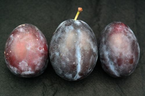 real plum plum fruit