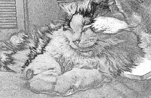 Reclining Cat Sketch