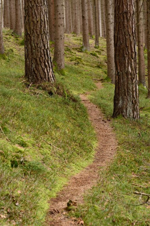 recovery away path