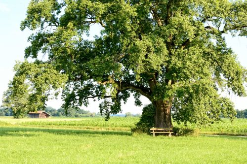 recovery leisure tree