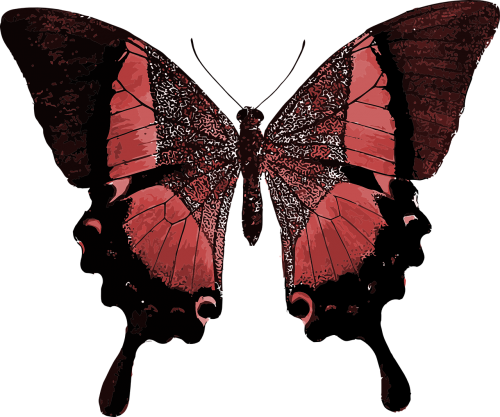 red butterfly colorful