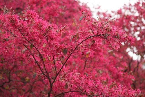 red flower brilliant