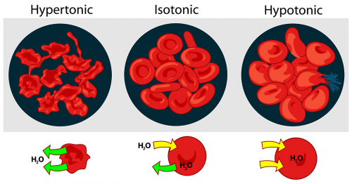 red science diagram