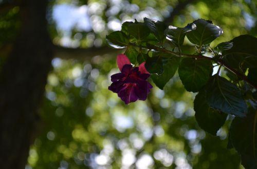 red flower bokeh