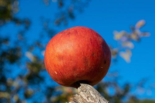 red apple  apple  ripe