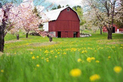 red barn  spring  flowering trees