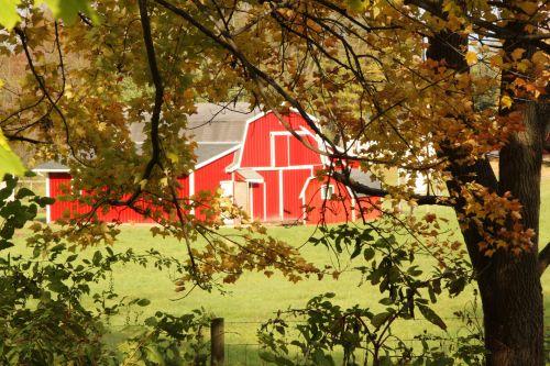 Red Barn Through Trees