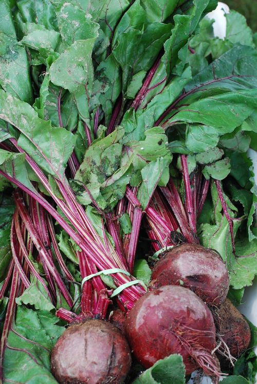 red beets red purple