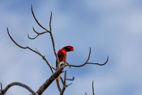red bird channel marketing program tropical