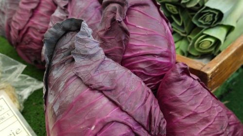 red cabbage herb violet