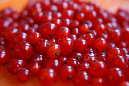 red currant berry ripe berry