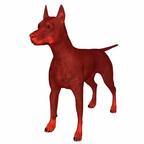 Red Doberman