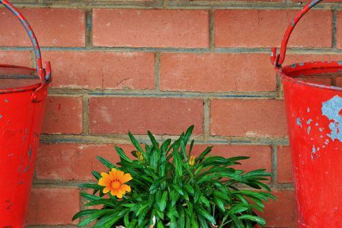 Red Fire Buckets, Yellow Flower