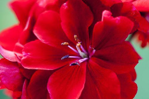 red flower sticks summer