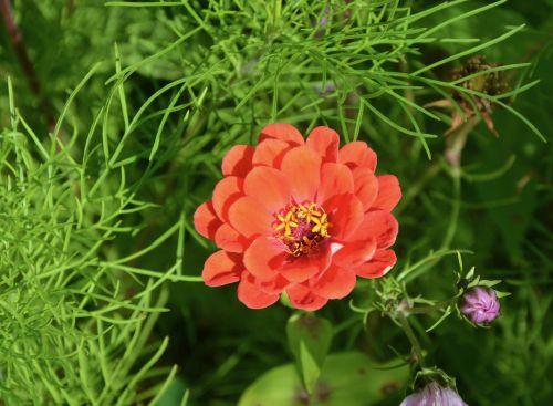 red flower nature garden