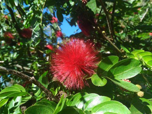red flower flower red