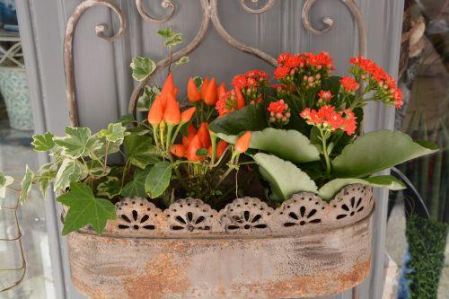 red flowers plant jardiniere