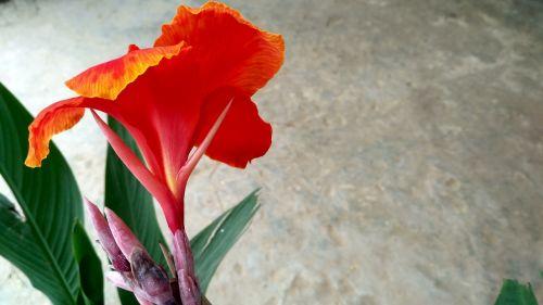 red flowers red petal flowers flowers