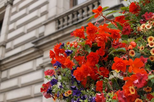 red flowers landscape flowers and building