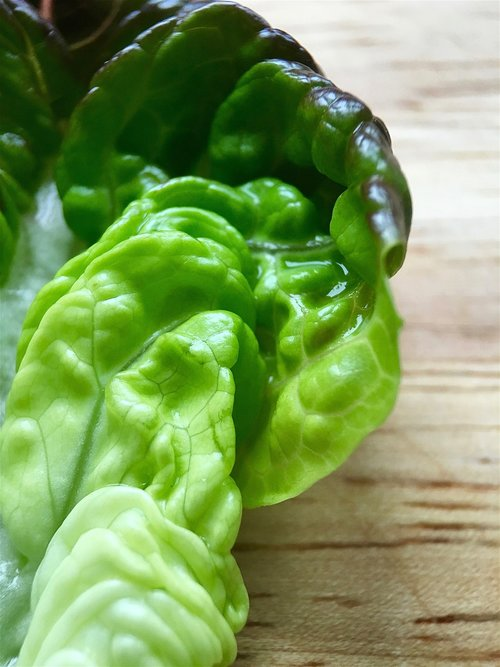 red gem lettuce  red gem  lettuce