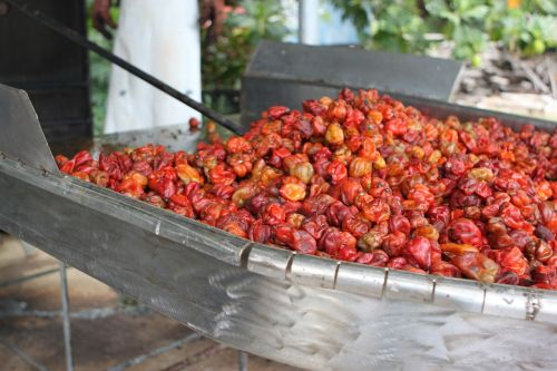 red habanero smoker belize