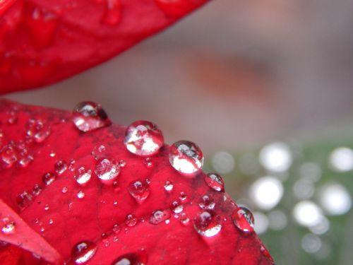 red leaves rain drops