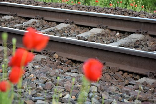 red poppy near railway  romantic  lovely
