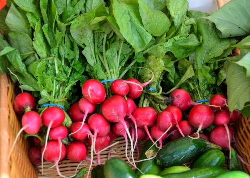 red radish radish vegetable