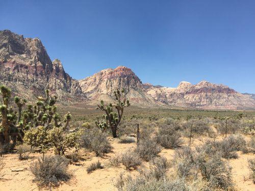 raudona roko kanjonas,Las Vegasas,Nevada,las,slėnis,scena,kelionė,valstybė,pietvakarius,dykuma,vegas,kalnas,formavimas,usa,nacionalinis